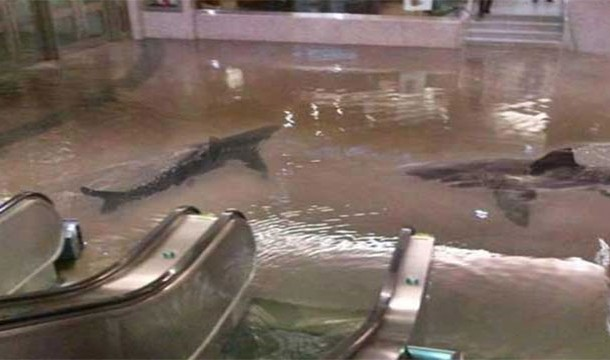 Collapse of Shark Tank in Kuwait