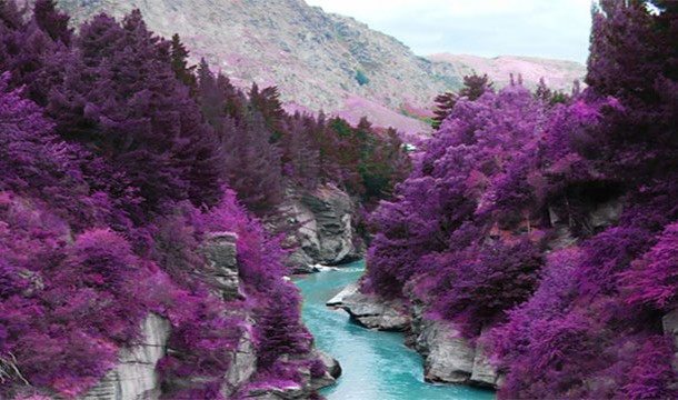 Purple Trees of Fairy Pools, Scotland