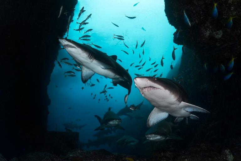 Cave of Sharks